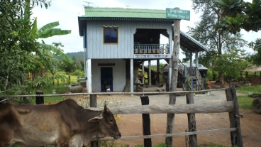 homestay and cow